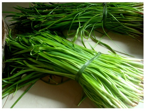 China Hunan Farmhouse Fresh Chives.
