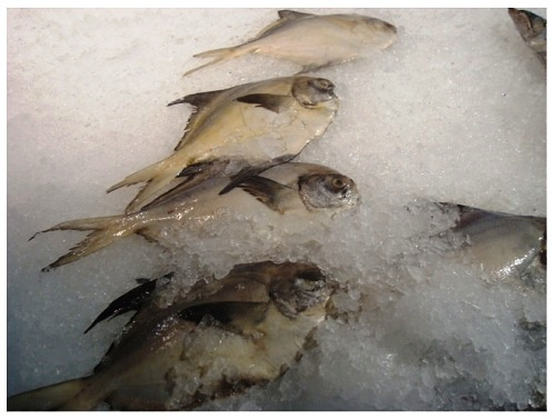 China Food Supermarket Frozen Fishes.
