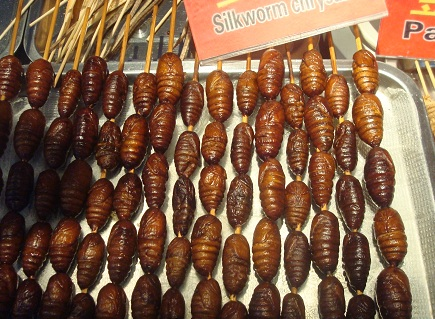 Chinese Food Fried Silkworm Chrysalis.