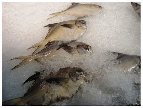 China Food Supermarket Frozen Fishes.